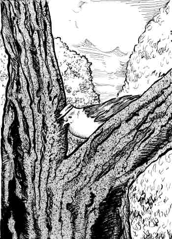 Pen and ink Illustration from Peter Pigeon of Snug Harbor by Ed Weiss